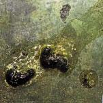 Pigeon Disease - Paratyphoid Droppings
