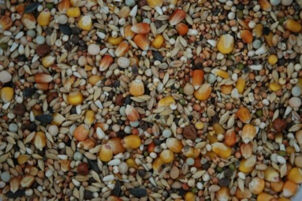 Grains, Fuel and Pigeon Racing – Suggested Rations