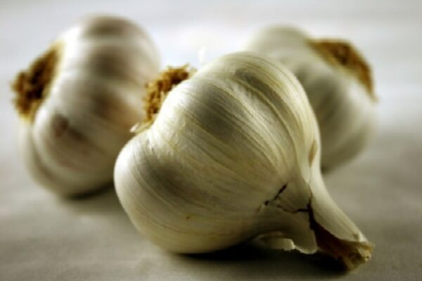 Garlic; Some Facts for the Fancier