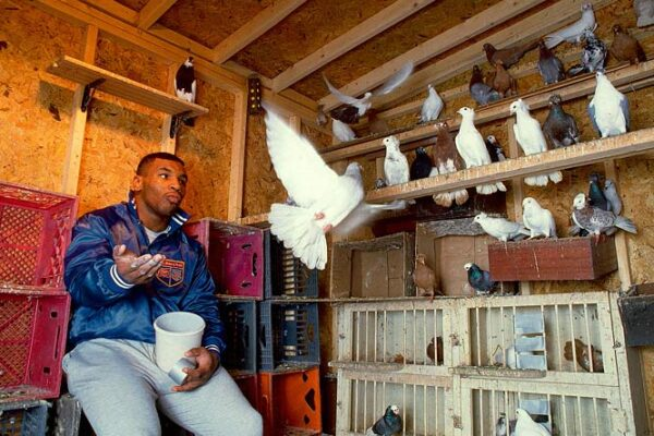 From Heavyweight to Featherweight, Pigeon Racing Reality Show!