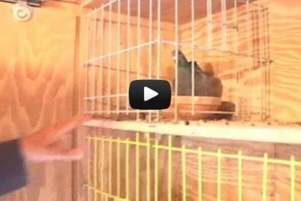 *Video* Loft Design, Dr. John Lamberton