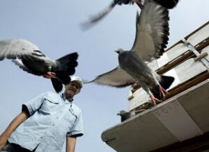 Training Your Pigeons