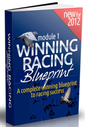 Pigeon Racing Blueprint