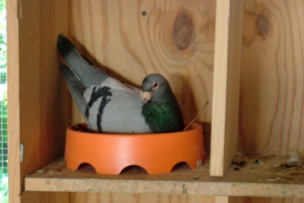 The Breeding Loft