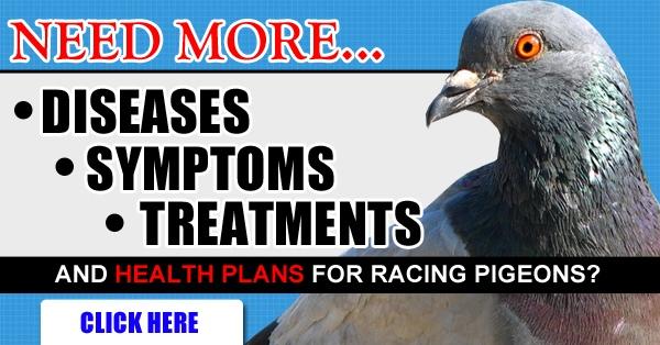 pigeon racing diseases