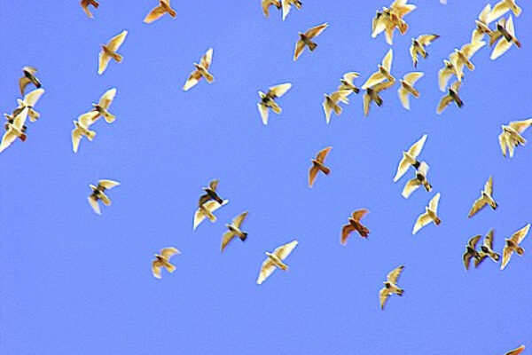 Culling Unproductive Flyers and Breeders (part2of2)
