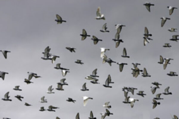Culling Unproductive Flyers and Breeders (part1 of 2)