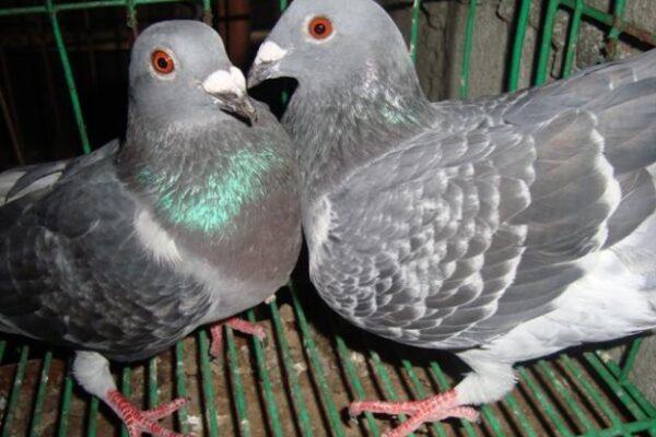 Pairing Breeders Part 2 of 2