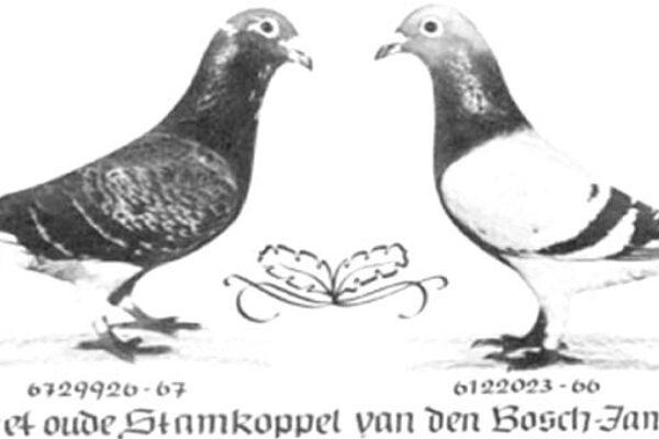 Factoring Genetics Example – The Meulemans Pigeons