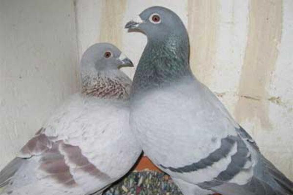 Pairing Breeders Part 1 of 2