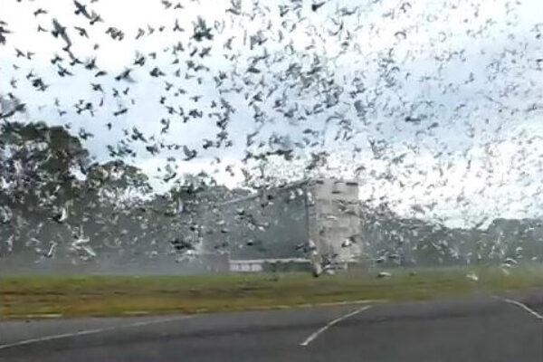 *Amazing Video* Pigeon Liberation