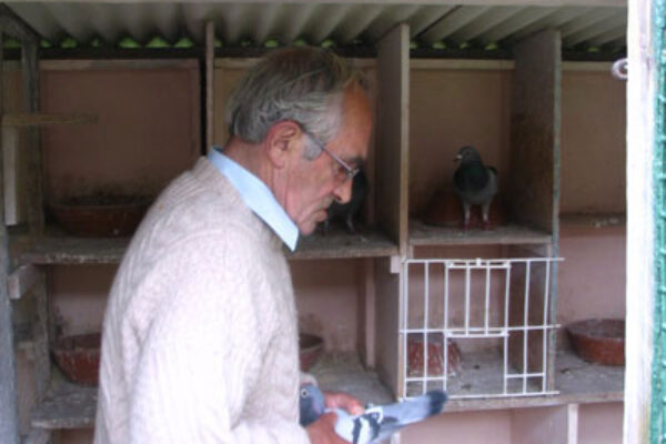 Pigeon Health Matters Part 1