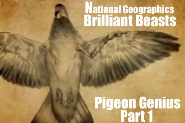 Brilliant Beasts: Pigeon Genius Part 1/4