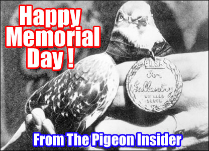 Happy Memorial Day From The Pigeon Insider