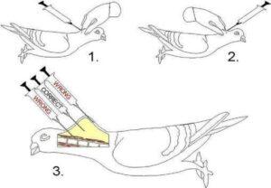 pigeon vaccination