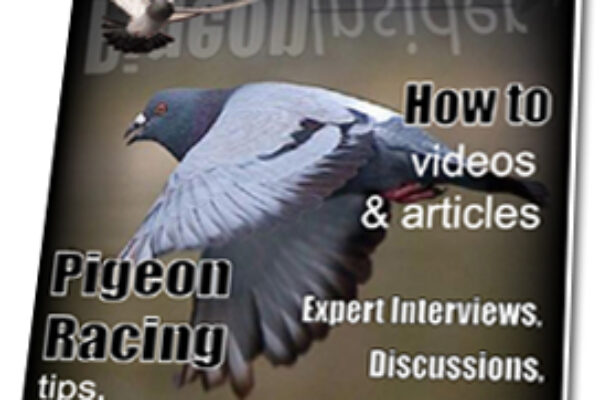 Would you like the Pigeon Insider to go Print?