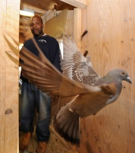 New York pigeon racing heritage