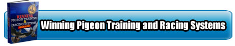 Winning-training-and-racing