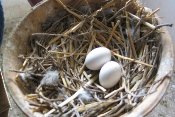 Using Fostering in your Breeding Strategy