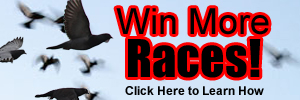 Win more races! Click here to learn how.