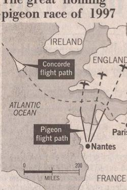 racing pigeon disaster of 97