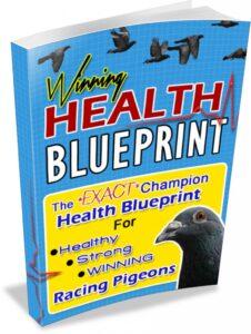 Pigeon Health Blueprint