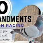 Pigeon Racing 10 Commandments